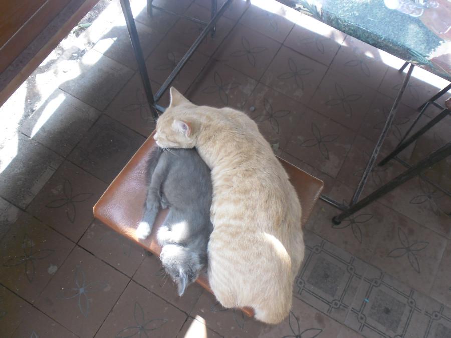 Мои коты.