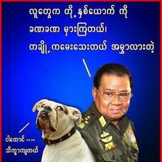 than shwe and dog