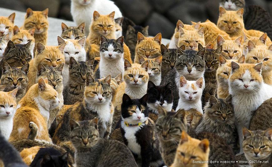 Кошки захватили японский остров