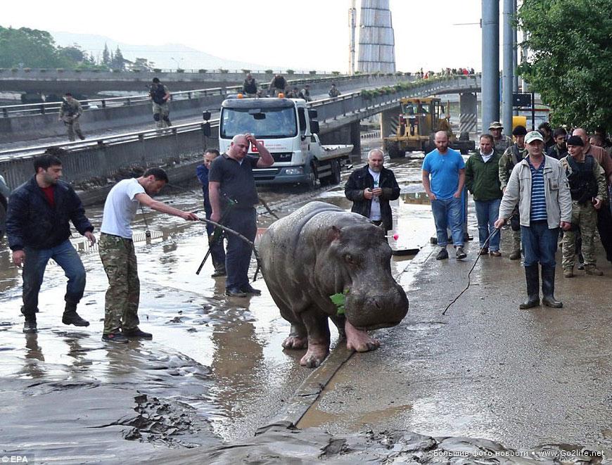 Растет число жертв наводнения в Тбилиси
