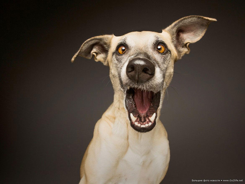 приколы с собаками картинки