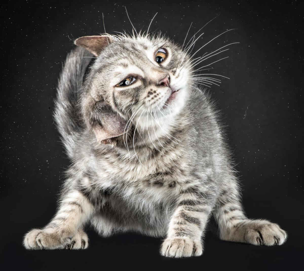 Отряхивающиеся котики