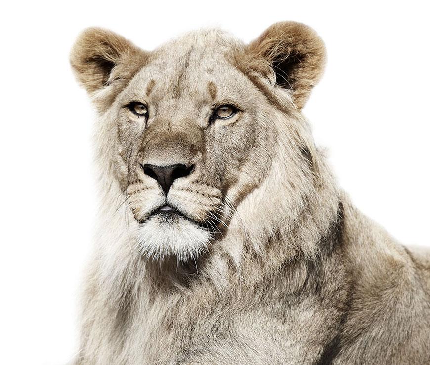 Портреты зверей на белом фоне
