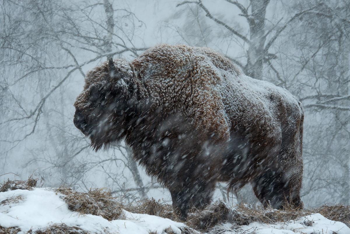 Дикая природа России 2015