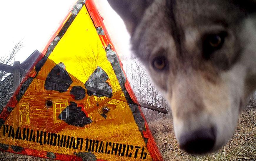 Чернобыль: дикая природа возвращается