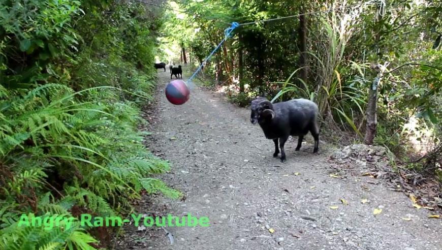Что будет, если повесить мяч на веревке и оставить в лесу