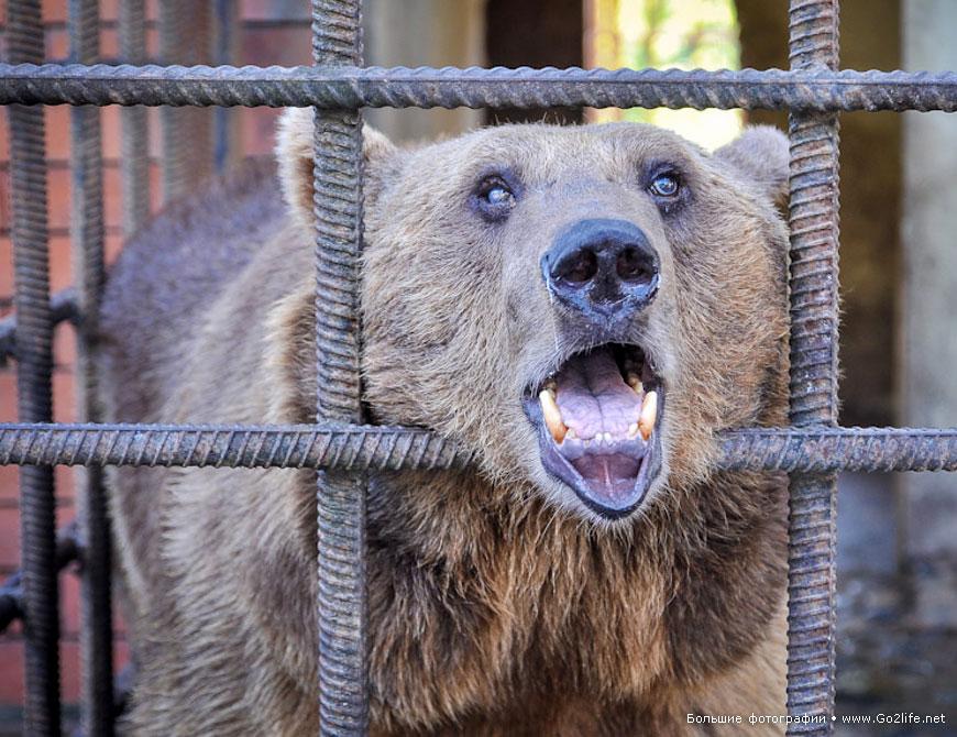 про несчастных медведей в ужасном зоопарке