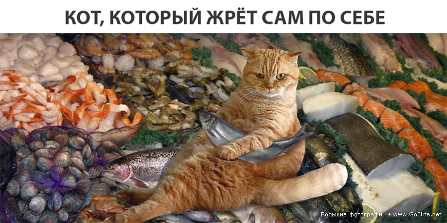 Кот объел магазин на 60 тысяч рублей