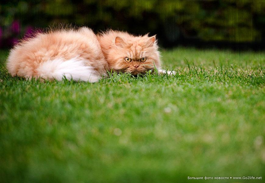 Месть рыжего злого кота