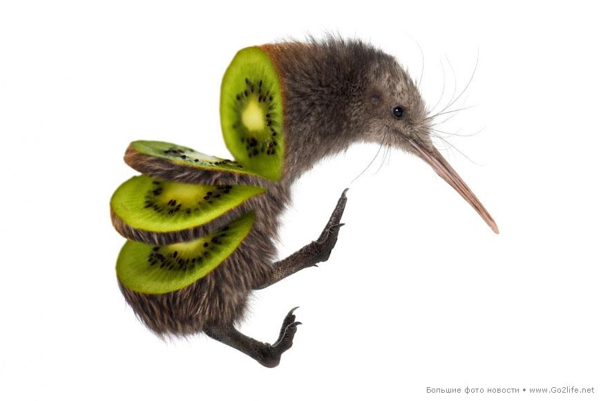 Kiwi: птичка киви + фрукт киви