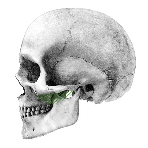 Острие зуба фото