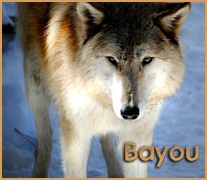 Bayou - 2013 (shauna)