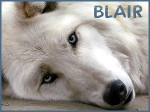 Blair - 2013 (Bill Young)