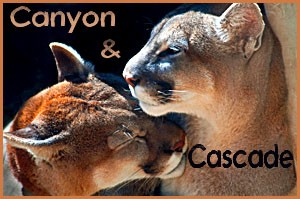 Canyon & Cascade - 2011 calendar contest