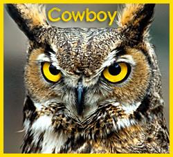 cowboy - 2011 calendar contest (ron boyd) (2)