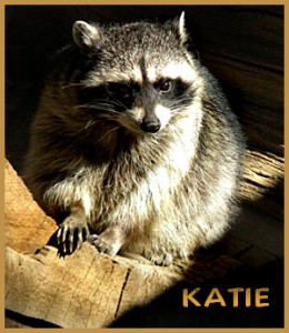 Katie - 2011 (shauna)