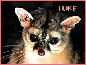 Luke5 - 2.19.12 (gale)