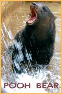 Pooh Bear (Summer McElroy 2012) hi res