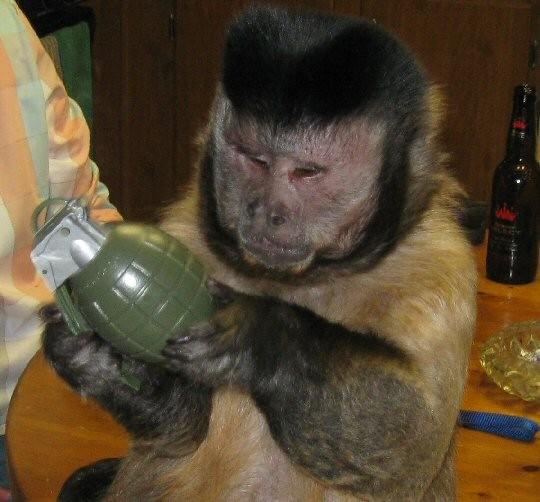 mono-y-granada