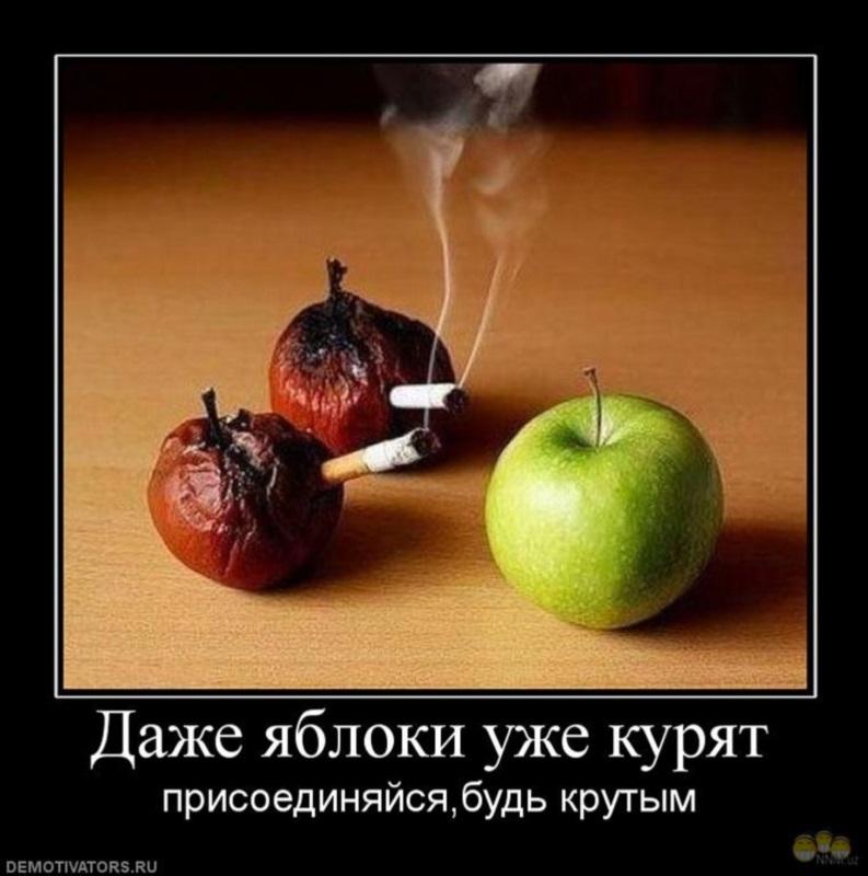 1271487223_886125_dazhe-yabloki-uzhe-kuryat