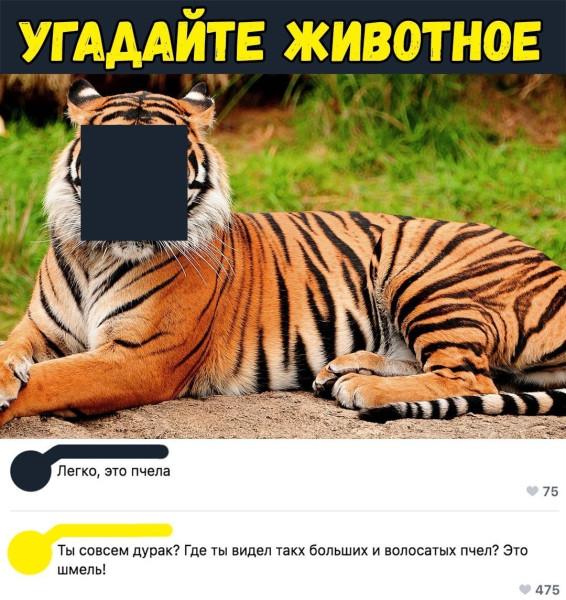 pYm90QQ_Zgo