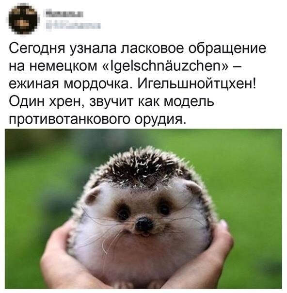 -rpKtSchDjE