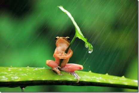 Frog palme[1]