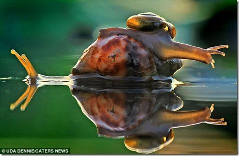 e2e5aead243e61f7ab924fec_Tiny-snail_6[1]