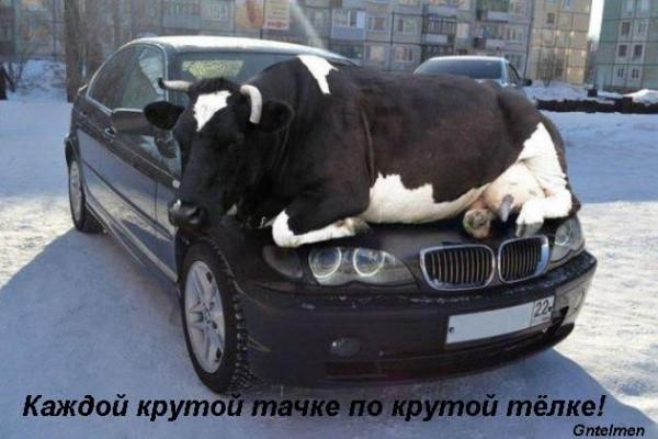 1361377108_lol54.ru_173