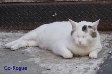SOHO-Cat
