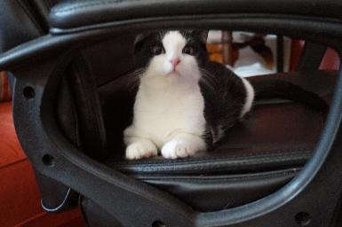 tunnelcat