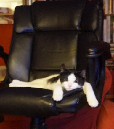 chaircat2