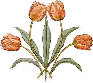 Vintage-Tulips-Illustration-GraphicsFairy