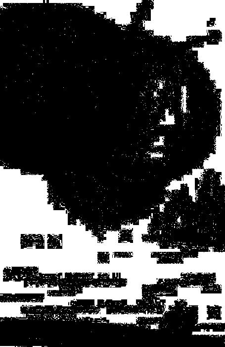 sasa10