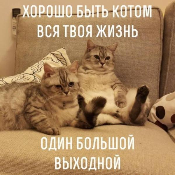 14963365_307727612959168_3207856458198356373_n