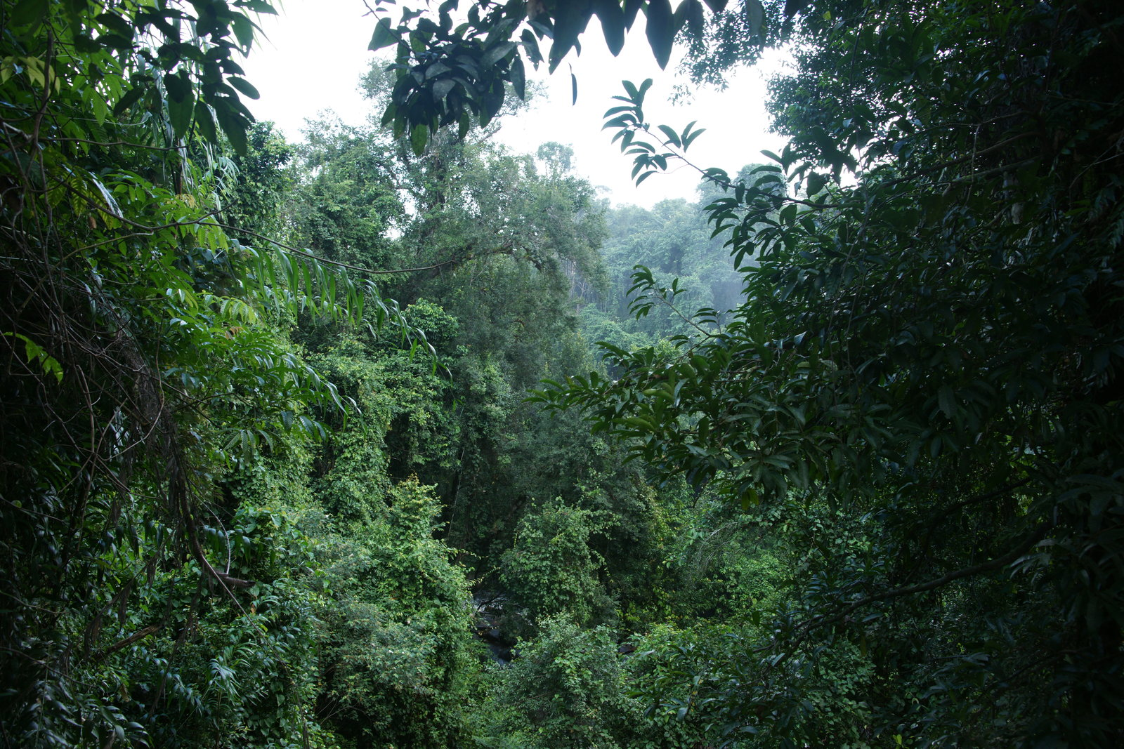 Cambodian jungle phnom koulen