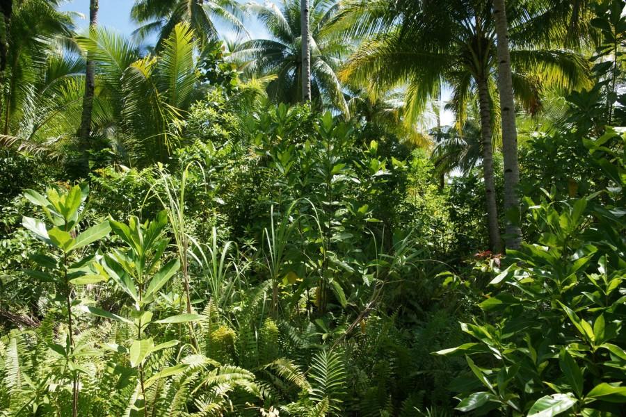 Philippine island vegetation