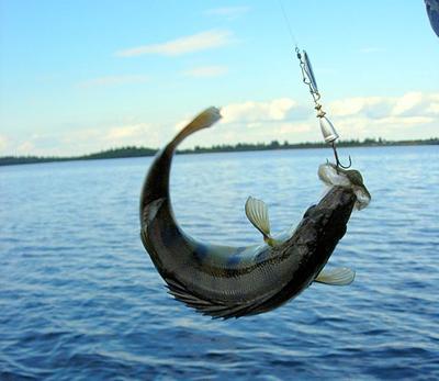 Первая фото подборка на тему рыбалка