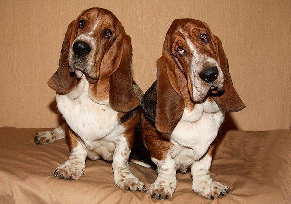 Собаки знаменитостей: звезды, история, породы и клички - Питомец