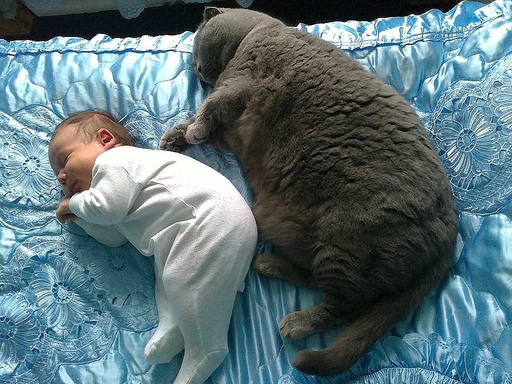 обои смешные до слез картинки с котами и младенцами фамилия фамилия
