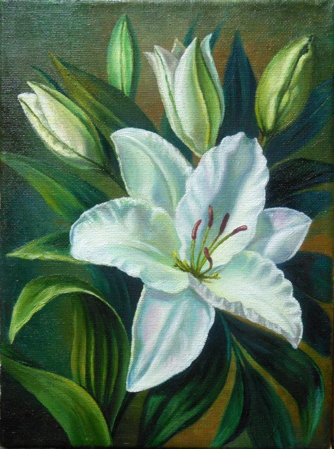 бел.лилия