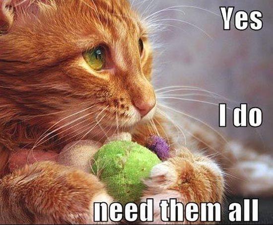0e3269235b8162134d27ab7ae9feddb6--funny-cats-funny-animals