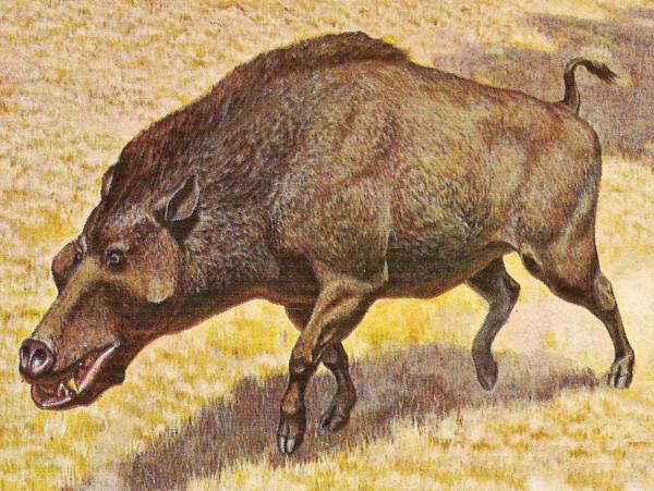 Deutsches Schwein.