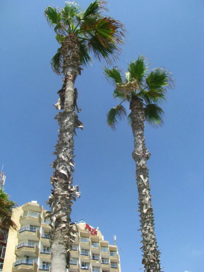 Лето, море и пальмы...