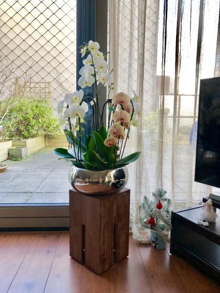 buket-iz-7-orhidey-kak-uhazhivat