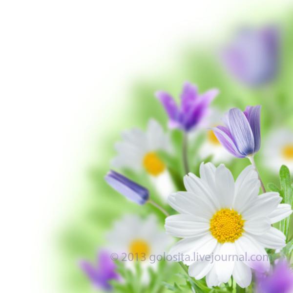 Spring flower field