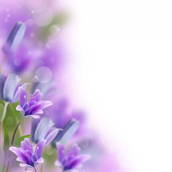 spring viola flower