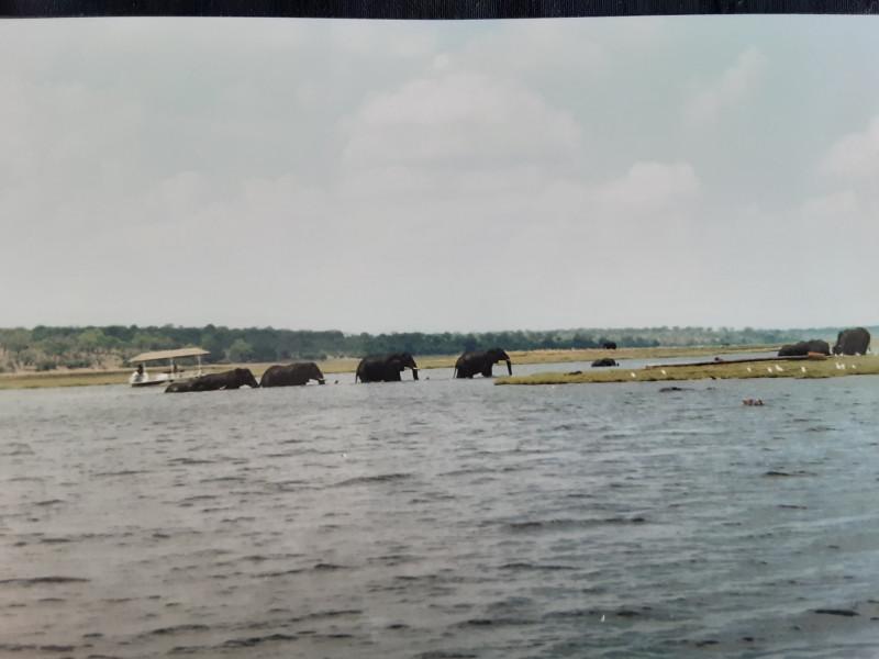 Слоны идут на острова поваляться в грязи. Их там многие десятки, но подплывать близко не айс, ибо они со слонятами, а лодка не джип- маневра может не хватить.