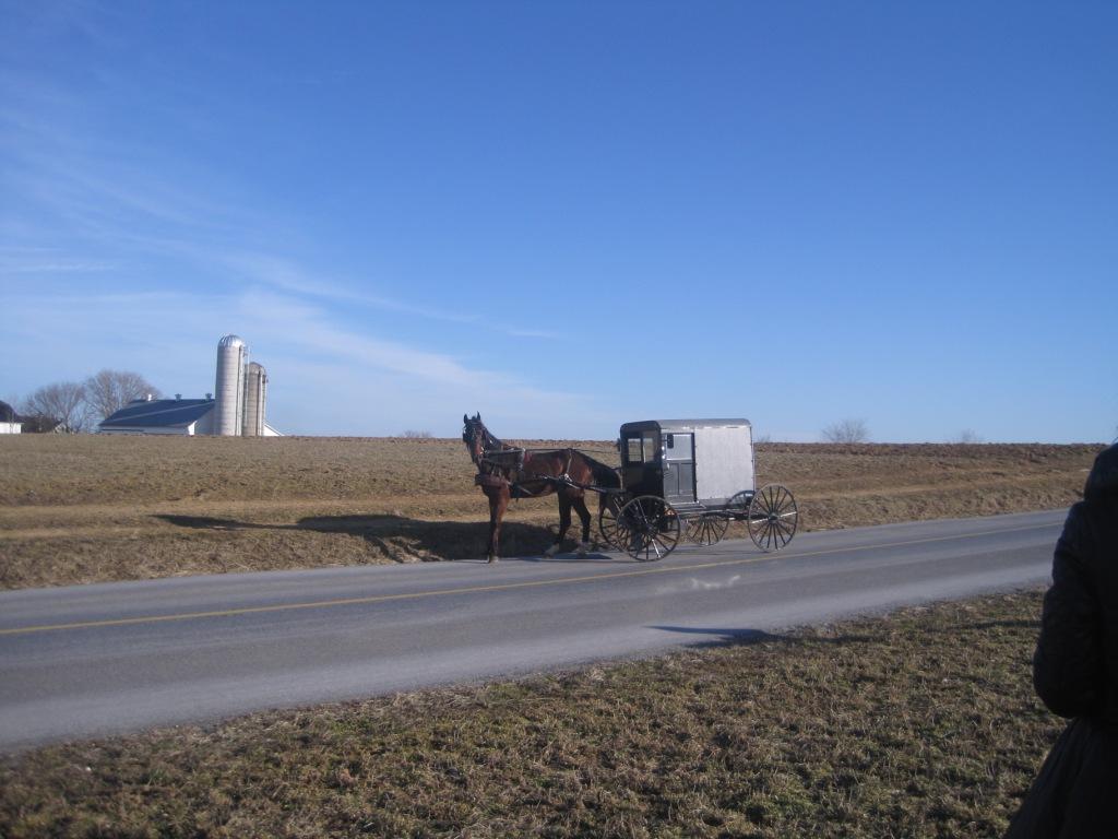 Лошадь здесь не только 230 кг высококачественного мяса, но и средство передвижения