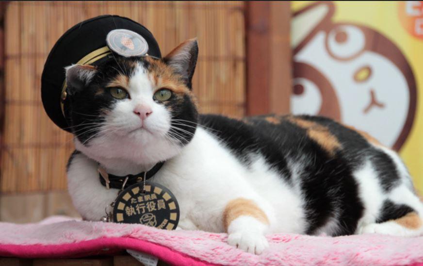 Коты на службе.